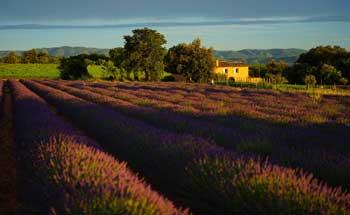 Dans le Vaucluse : Sérénisud, à Caromb, vous propose l'entretien de votre résidence secondaire.